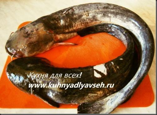 som-zharenyiy-s-lukom
